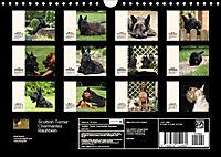 Scottish Terrier - Charmantes Rauhbein (Wandkalender 2019 DIN A4 quer) - Produktdetailbild 13