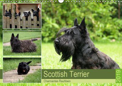 Scottish Terrier - Charmantes Rauhbein (Wandkalender 2019 DIN A3 quer), Birgit Bodsch