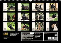 Scottish Terrier - Charmantes Rauhbein (Wandkalender 2019 DIN A3 quer) - Produktdetailbild 13