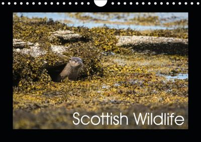 Scottish Wildlife (Wall Calendar 2019 DIN A4 Landscape), Anthony Robson
