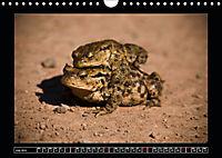 Scottish Wildlife (Wall Calendar 2019 DIN A4 Landscape) - Produktdetailbild 7