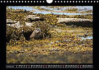 Scottish Wildlife (Wall Calendar 2019 DIN A4 Landscape) - Produktdetailbild 1