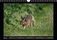 Scottish Wildlife (Wall Calendar 2019 DIN A4 Landscape) - Produktdetailbild 5