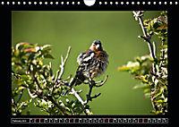 Scottish Wildlife (Wall Calendar 2019 DIN A4 Landscape) - Produktdetailbild 2
