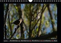 Scottish Wildlife (Wall Calendar 2019 DIN A4 Landscape) - Produktdetailbild 4