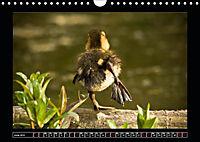 Scottish Wildlife (Wall Calendar 2019 DIN A4 Landscape) - Produktdetailbild 6