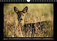 Scottish Wildlife (Wall Calendar 2019 DIN A4 Landscape) - Produktdetailbild 3