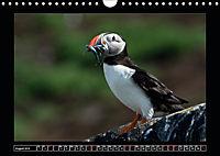 Scottish Wildlife (Wall Calendar 2019 DIN A4 Landscape) - Produktdetailbild 8