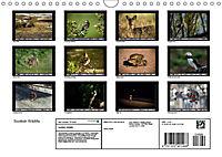 Scottish Wildlife (Wall Calendar 2019 DIN A4 Landscape) - Produktdetailbild 13