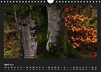 Scottish Woodlands (Wall Calendar 2019 DIN A4 Landscape) - Produktdetailbild 4