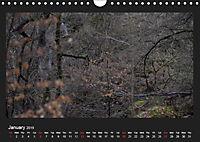 Scottish Woodlands (Wall Calendar 2019 DIN A4 Landscape) - Produktdetailbild 1