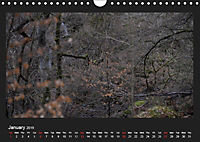 Scottish Woodlands (Wall Calendar 2019 DIN A4 Landscape) - Produktdetailbild 1