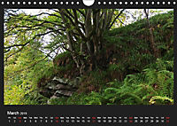 Scottish Woodlands (Wall Calendar 2019 DIN A4 Landscape) - Produktdetailbild 3