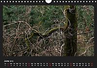 Scottish Woodlands (Wall Calendar 2019 DIN A4 Landscape) - Produktdetailbild 6