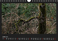 Scottish Woodlands (Wall Calendar 2019 DIN A4 Landscape) - Produktdetailbild 6
