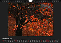 Scottish Woodlands (Wall Calendar 2019 DIN A4 Landscape) - Produktdetailbild 12