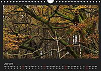 Scottish Woodlands (Wall Calendar 2019 DIN A4 Landscape) - Produktdetailbild 7