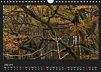 Scottish Woodlands (Wall Calendar 2019 DIN A4 Landscape) - Produktdetailbild 7