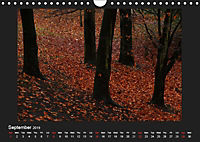 Scottish Woodlands (Wall Calendar 2019 DIN A4 Landscape) - Produktdetailbild 9