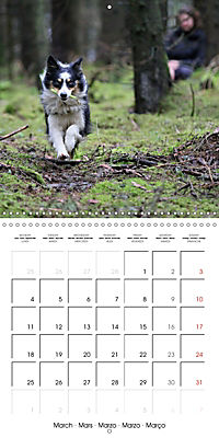 Search and Rescue Dogs (Wall Calendar 2019 300 × 300 mm Square) - Produktdetailbild 3