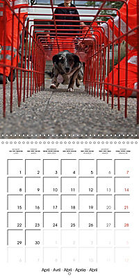 Search and Rescue Dogs (Wall Calendar 2019 300 × 300 mm Square) - Produktdetailbild 4