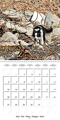 Search and Rescue Dogs (Wall Calendar 2019 300 × 300 mm Square) - Produktdetailbild 5