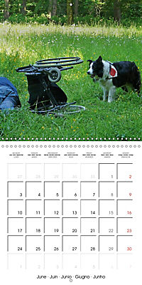 Search and Rescue Dogs (Wall Calendar 2019 300 × 300 mm Square) - Produktdetailbild 6