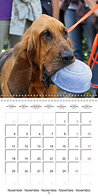 Search and Rescue Dogs (Wall Calendar 2019 300 × 300 mm Square) - Produktdetailbild 11