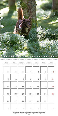 Search and Rescue Dogs (Wall Calendar 2019 300 × 300 mm Square) - Produktdetailbild 8