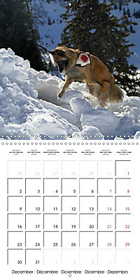 Search and Rescue Dogs (Wall Calendar 2019 300 × 300 mm Square) - Produktdetailbild 12