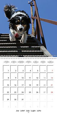 Search and Rescue Dogs (Wall Calendar 2019 300 × 300 mm Square) - Produktdetailbild 7