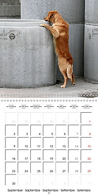 Search and Rescue Dogs (Wall Calendar 2019 300 × 300 mm Square) - Produktdetailbild 9