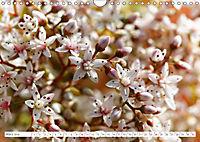 Sedum Schönheiten im Garten (Wandkalender 2019 DIN A4 quer) - Produktdetailbild 3