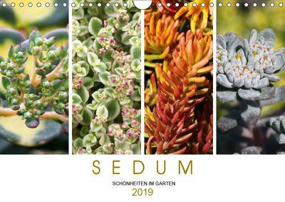 Sedum Schönheiten im Garten (Wandkalender 2019 DIN A4 quer), Martina Cross