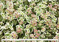 Sedum Schönheiten im Garten (Wandkalender 2019 DIN A4 quer) - Produktdetailbild 2