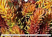Sedum Schönheiten im Garten (Wandkalender 2019 DIN A4 quer) - Produktdetailbild 1