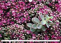 Sedum Schönheiten im Garten (Wandkalender 2019 DIN A4 quer) - Produktdetailbild 7