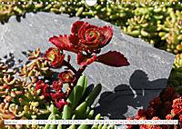 Sedum Schönheiten im Garten (Wandkalender 2019 DIN A4 quer) - Produktdetailbild 4