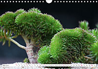 Sedum Schönheiten im Garten (Wandkalender 2019 DIN A4 quer) - Produktdetailbild 5