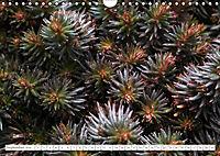 Sedum Schönheiten im Garten (Wandkalender 2019 DIN A4 quer) - Produktdetailbild 9