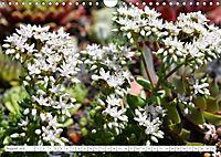 Sedum Schönheiten im Garten (Wandkalender 2019 DIN A4 quer) - Produktdetailbild 8