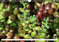Sedum Schönheiten im Garten (Wandkalender 2019 DIN A4 quer) - Produktdetailbild 10