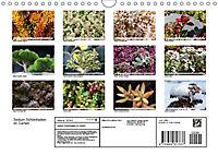 Sedum Schönheiten im Garten (Wandkalender 2019 DIN A4 quer) - Produktdetailbild 13