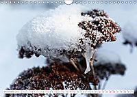 Sedum Schönheiten im Garten (Wandkalender 2019 DIN A4 quer) - Produktdetailbild 12