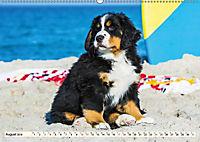 Seebärchen entdecken die Welt - Berner Sennenhunde (Wandkalender 2019 DIN A2 quer) - Produktdetailbild 8