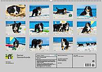 Seebärchen entdecken die Welt - Berner Sennenhunde (Wandkalender 2019 DIN A2 quer) - Produktdetailbild 13