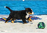 Seebärchen entdecken die Welt - Berner Sennenhunde (Wandkalender 2019 DIN A3 quer) - Produktdetailbild 3
