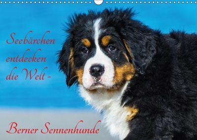Seebärchen entdecken die Welt - Berner Sennenhunde (Wandkalender 2019 DIN A3 quer), Sigrid Starick