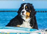 Seebärchen entdecken die Welt - Berner Sennenhunde (Wandkalender 2019 DIN A3 quer) - Produktdetailbild 4