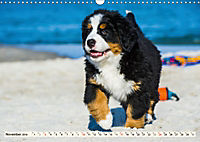 Seebärchen entdecken die Welt - Berner Sennenhunde (Wandkalender 2019 DIN A3 quer) - Produktdetailbild 11